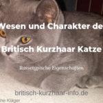 Charakter und Wesen der Britisch Kurzhaar Katze
