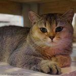 12 Fragen die Sie sich stellen sollten bevor eine Katze einzieht