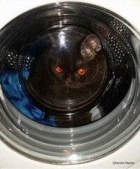 """So eine """"Waschmaschinen-Höhle"""" ist für Katzen sehr gemütlich."""