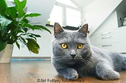 Wohnung katzensicher machen