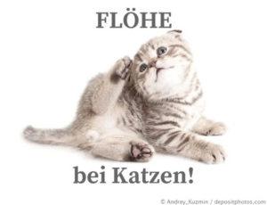 Katze mit Flöhen kratzt sich