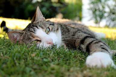Katze liegt im Schatten auf kühlem Gras