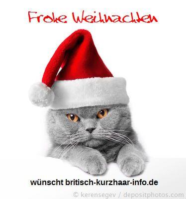 Katze mit Nikolausmütze wünscht frohe Weihnachten