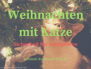 Katze an Weihnachten unterm Weihnachtsbaum