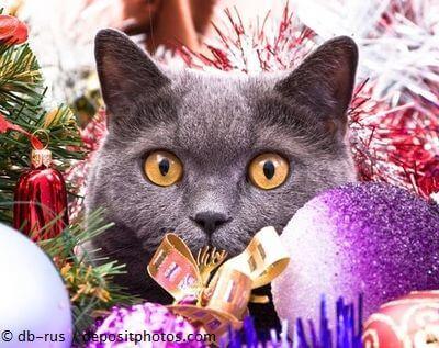 Katze umgeben von Weihnachtsbaum-Schmuck