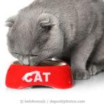 Katze frisst hochwertiges Katzenfutter